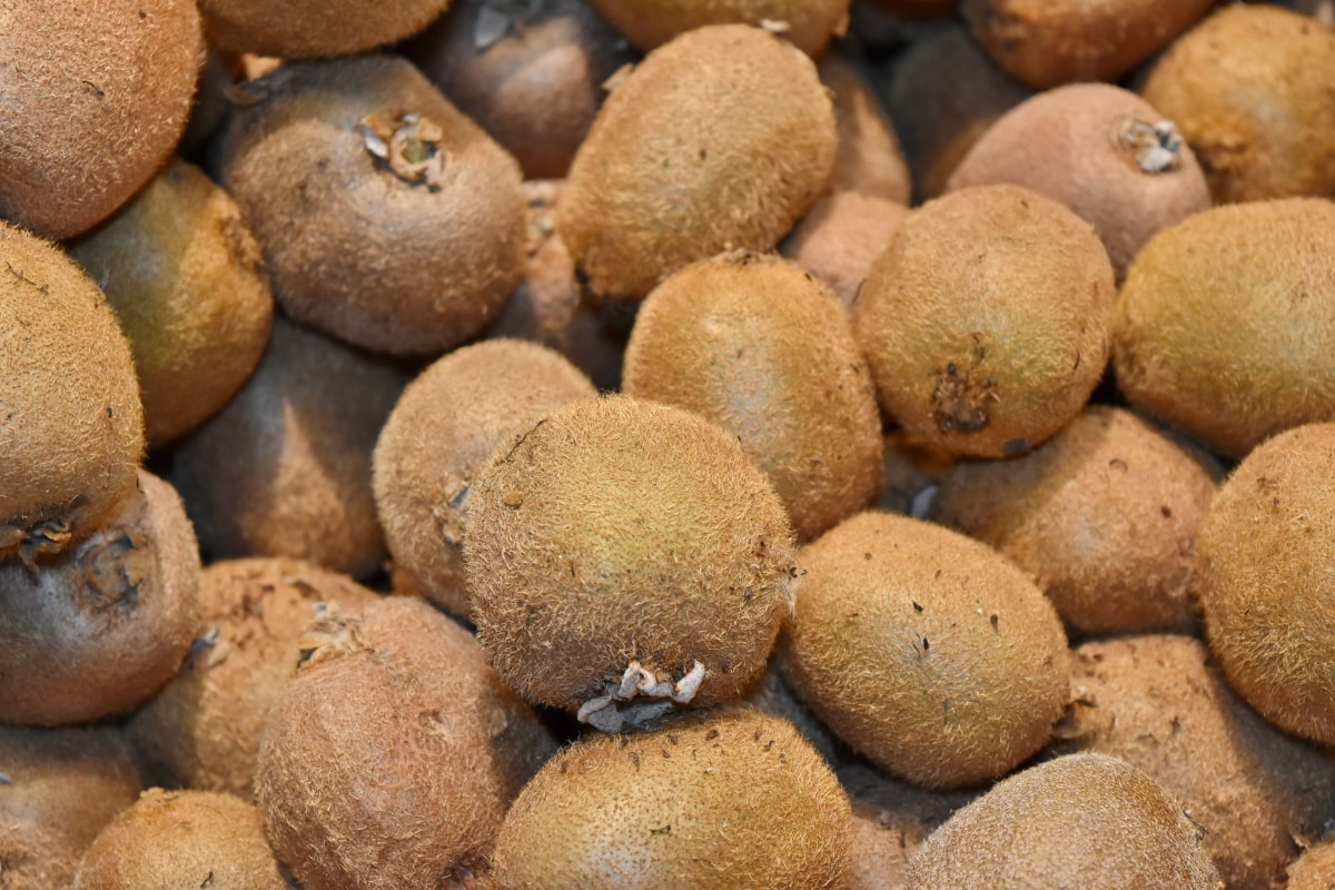 agriculture, fruit, light brown, merchandise, kiwi, ingredients, nutrition, whole, food, delicious