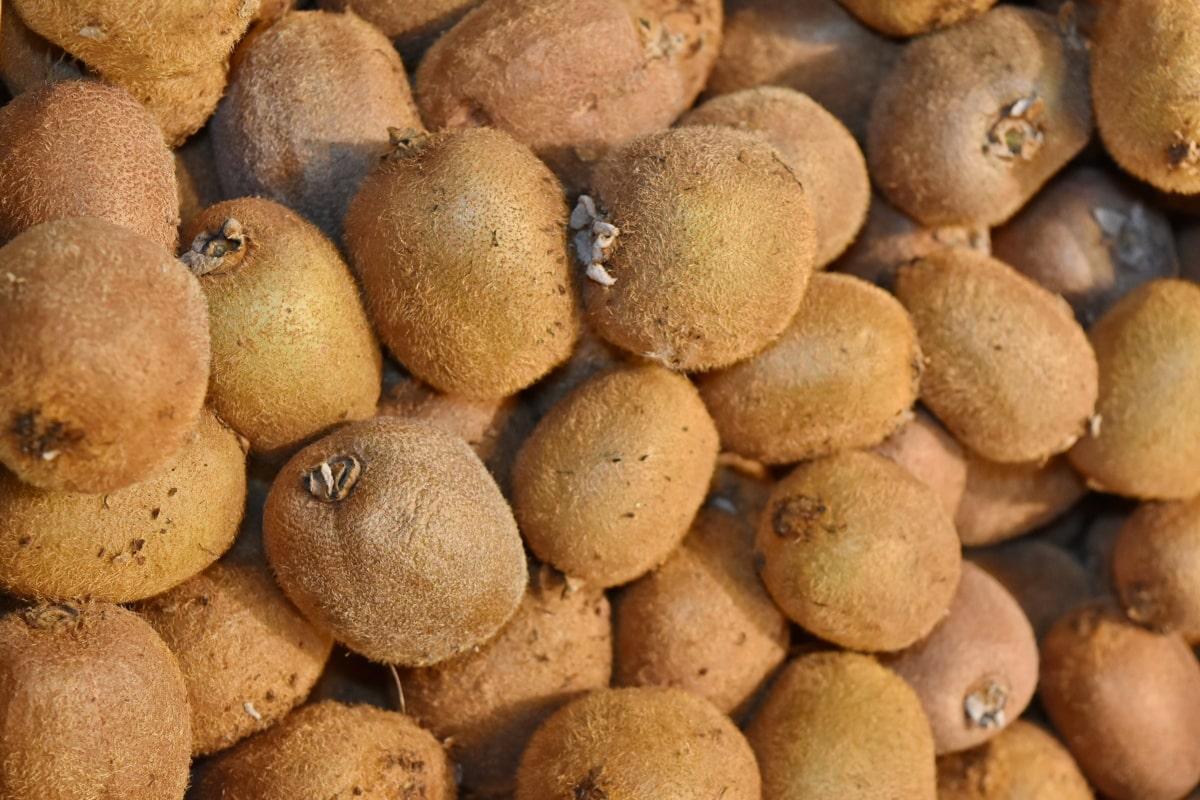 fruit, nutrition, food, kiwi, health, many, stacks, delicious, whole, farming