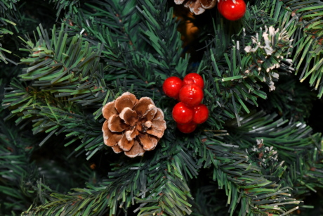 berries, christmas, christmas tree, conifers, ornament, decoration, conifer, winter, evergreen, tree