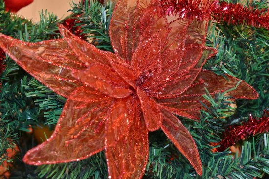branches, christmas tree, conifers, decoration, evergreen, herb, winter, tree, christmas, color