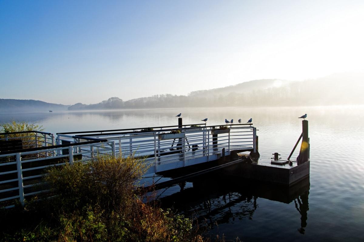 lakeside, birds, foggy, morning, pier, seagulls, sunshine, water system, waterfront, mooring