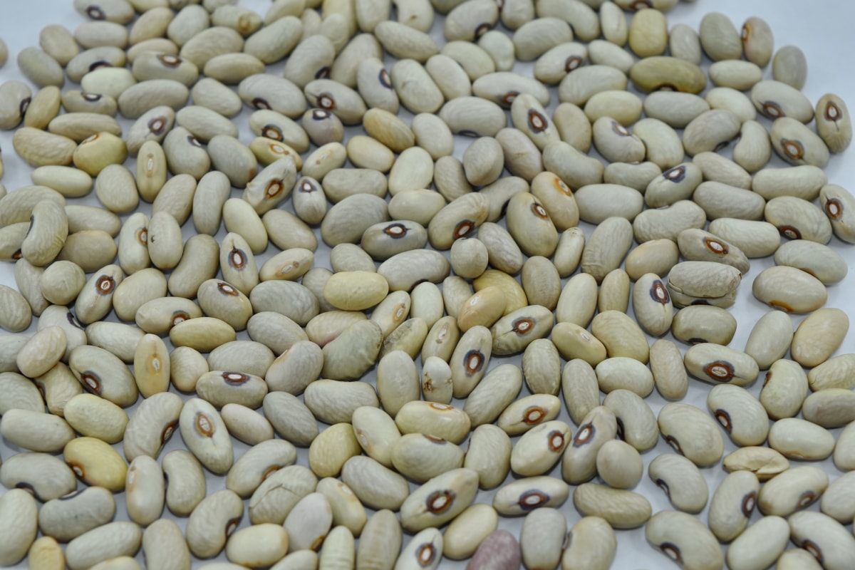 nutrition, food, ingredients, bean, health, vegetable, many, dry, farming, texture
