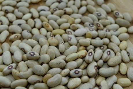 bean, many, health, vegetable, ingredients, nutrition, dry, food, farming, pile
