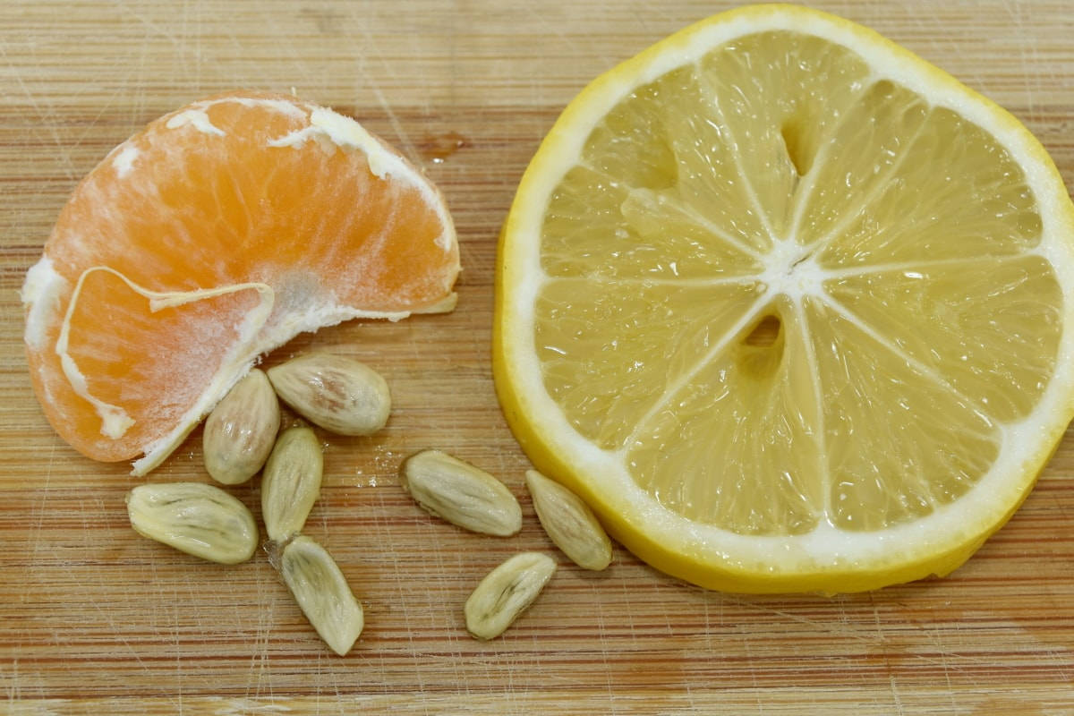 lemon, seed, slices, wet, healthy, orange, fruit, citrus, food, juice