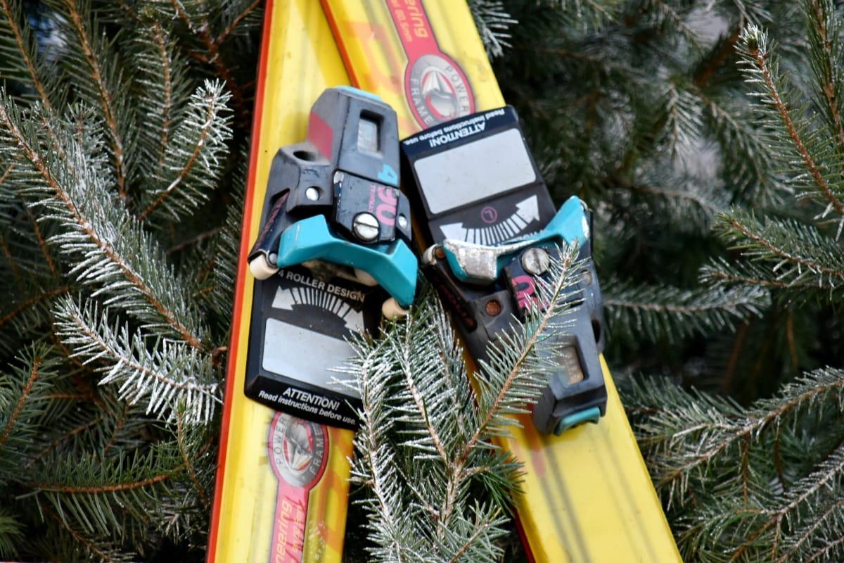 branch, conifers, equipment, object, skiing, sport, winter, tree, evergreen, decoration