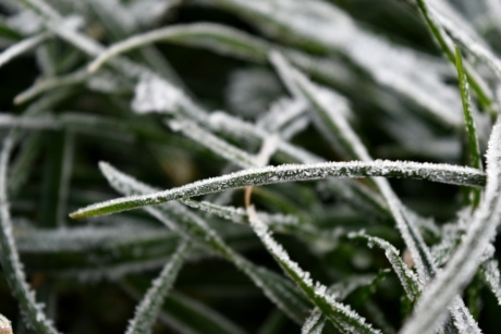 details, frost, green grass, snow, plant, nature, flora, dew, frozen, winter