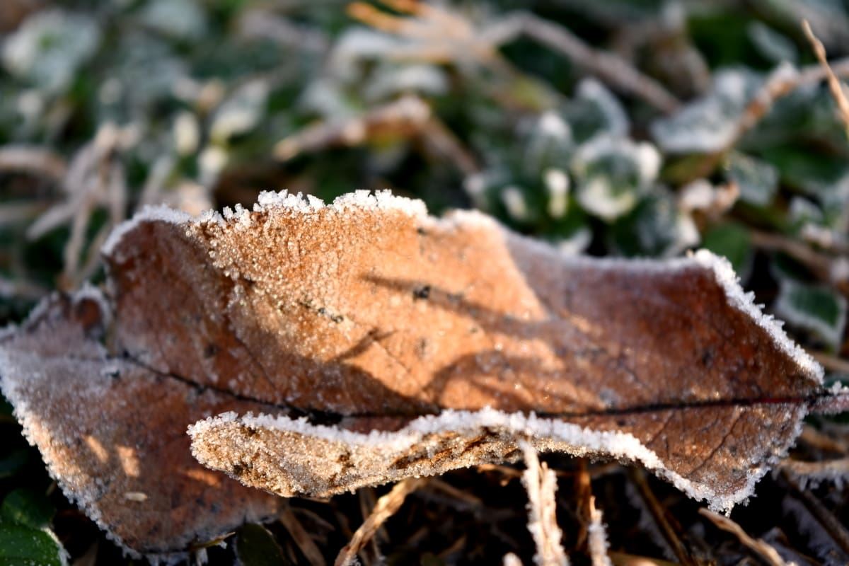 dry, frost, green grass, green leaves, leaf, yellowish brown, organism, nature, fungus, wood
