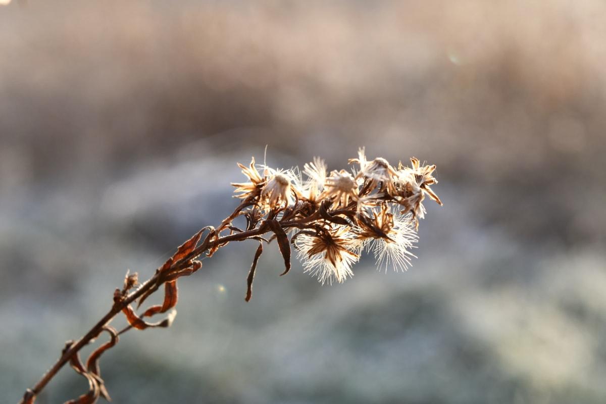 dry season, outdoor, sunshine, wildflower, wildlife, plant, nature, frost, winter, outdoors