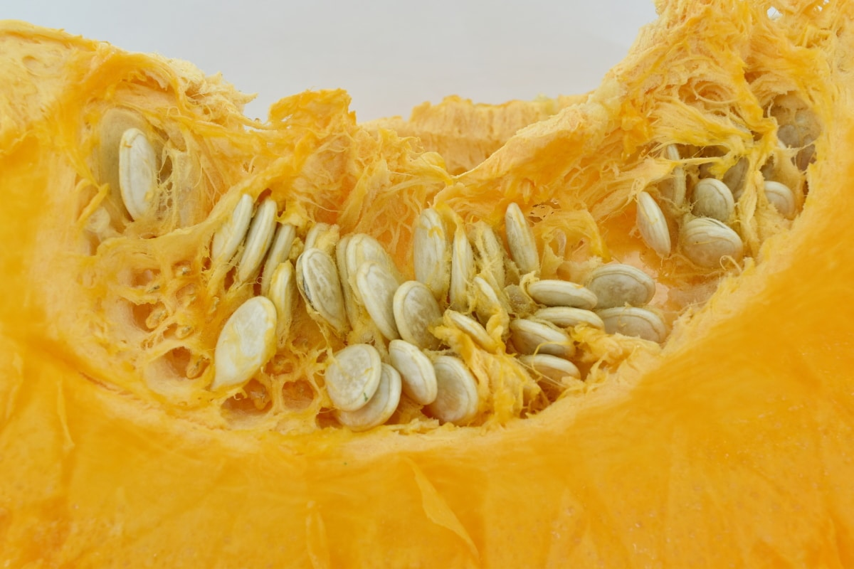close-up, orange yellow, pumpkin, pumpkin seed, side view, squash, vegetable, food, healthy, nutrition