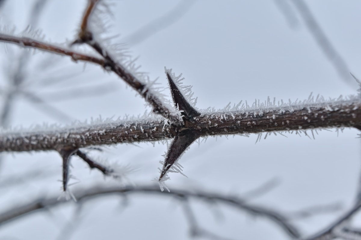 branches, cold, frozen, ice crystal, mist, thorn, twig, winter, snow, frost