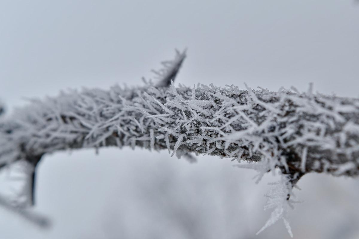 foggy, frosty, frozen, snowstorm, twig, tree, crystal, weather, snow, ice