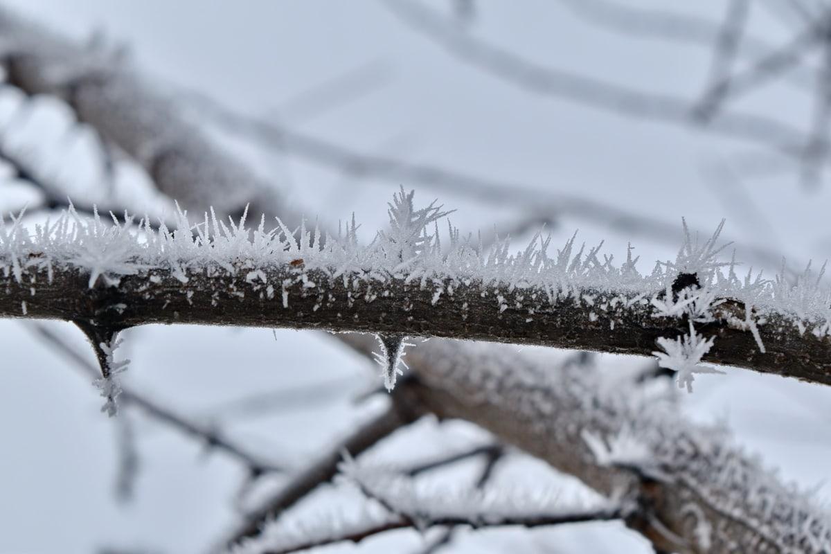 neblig, Eiskristall, Schneeflocken, Schneesturm, Zweig, gefroren, Frost, Eis, Struktur, Wetter