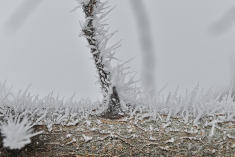 close-up, detail, freeze, frost, frozen, ice crystal, sharp, thorn, cold, forest
