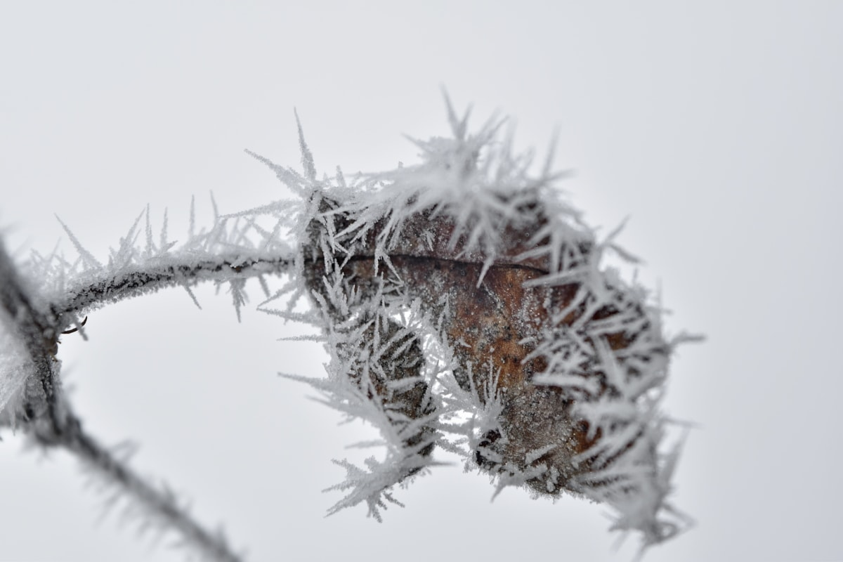 branch, dry, freeze, ice crystal, mist, snowflakes, snow, sharp, nature, winter