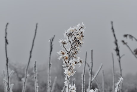cold, fog, frost, meadow, wildflower, winter, plant, nature, snow, season