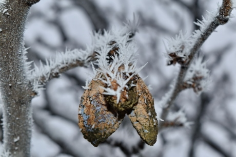 cold, dry, foggy, frozen, fruit, orchard, twig, winter, snow, frost