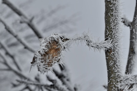 branch, brown, dry, frost, frosty, frozen, leaf, tree, winter, cold