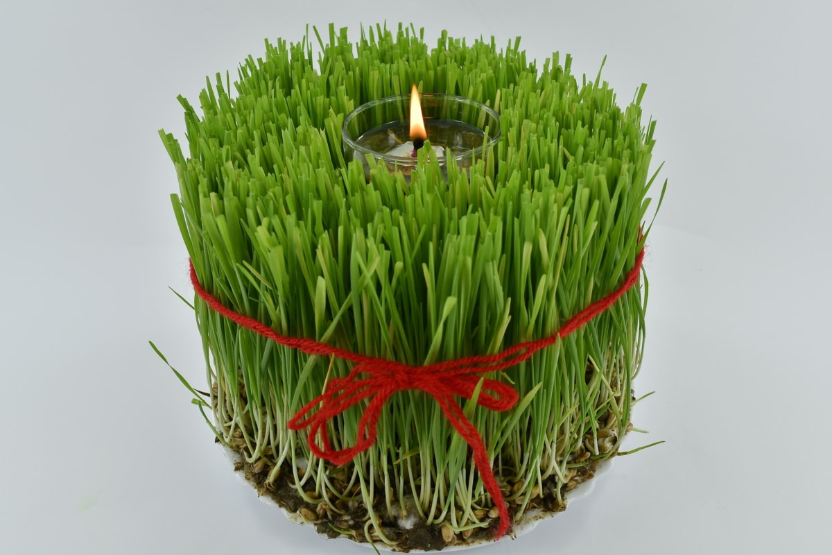 christianity, christmas, evening, flame, orthodox, plant, religion, wheat, nature, health