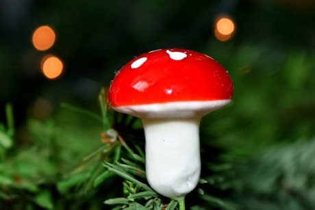 backlight, christmas tree, macro, mushroom, nature, summer, outdoors, christmas, leaf, blur