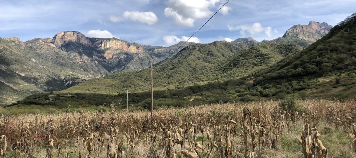 poljoprivreda, Asia, polje kukuruza, suha sezona, ruralni, dolina, raspon, planine, krajolik, planine