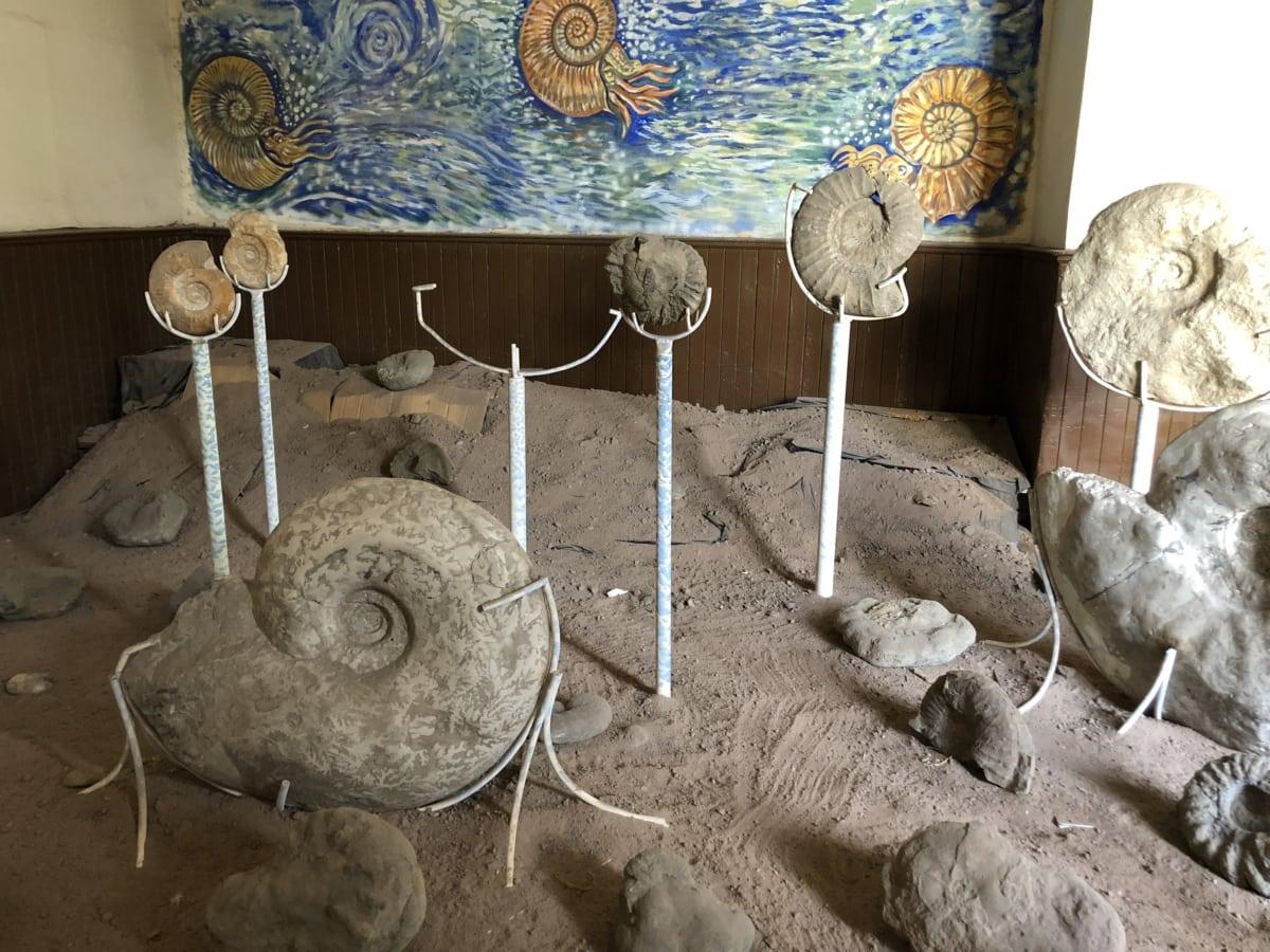 fósseis, museu, caracóis, velho, ainda vida, antiga, dentro de casa, ossos, detail