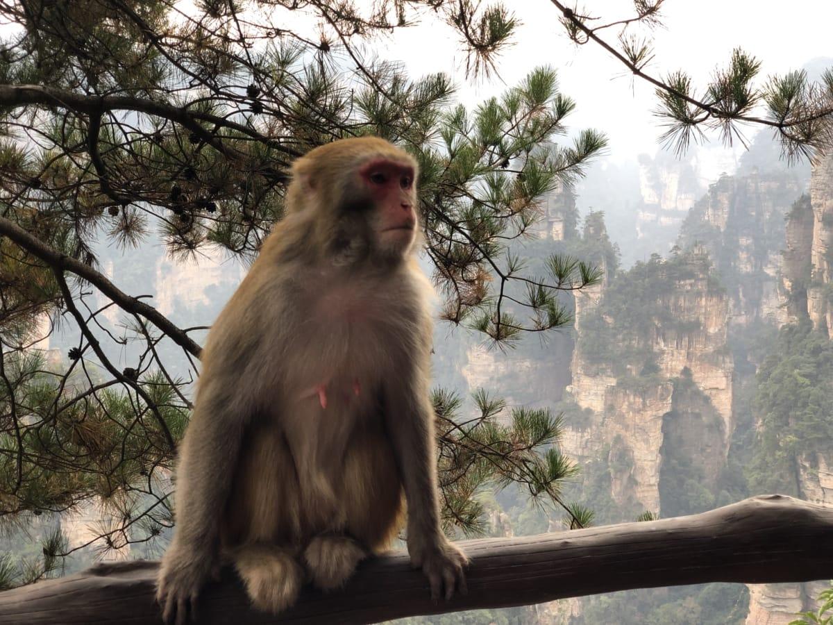 hoang dã, khỉ ở miền nhiệt đới, linh trưởng, con khỉ, động vật hoang dã, cây, thiên nhiên, động vật, gỗ, rừng