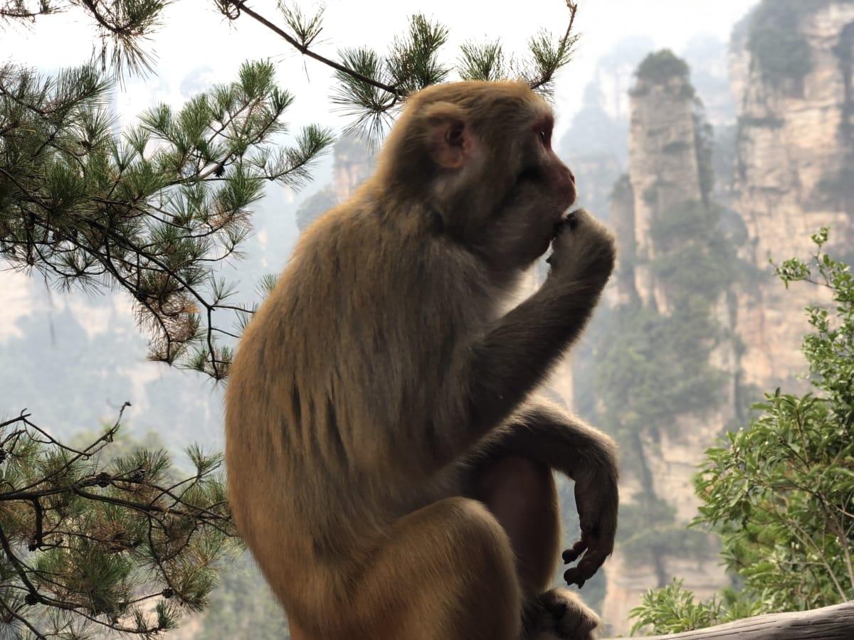 khỉ ở miền nhiệt đới, con khỉ, môi trường sống tự nhiên, chân dung, Side xem, hoang dã, động vật hoang dã, cây, hoang dã, linh trưởng