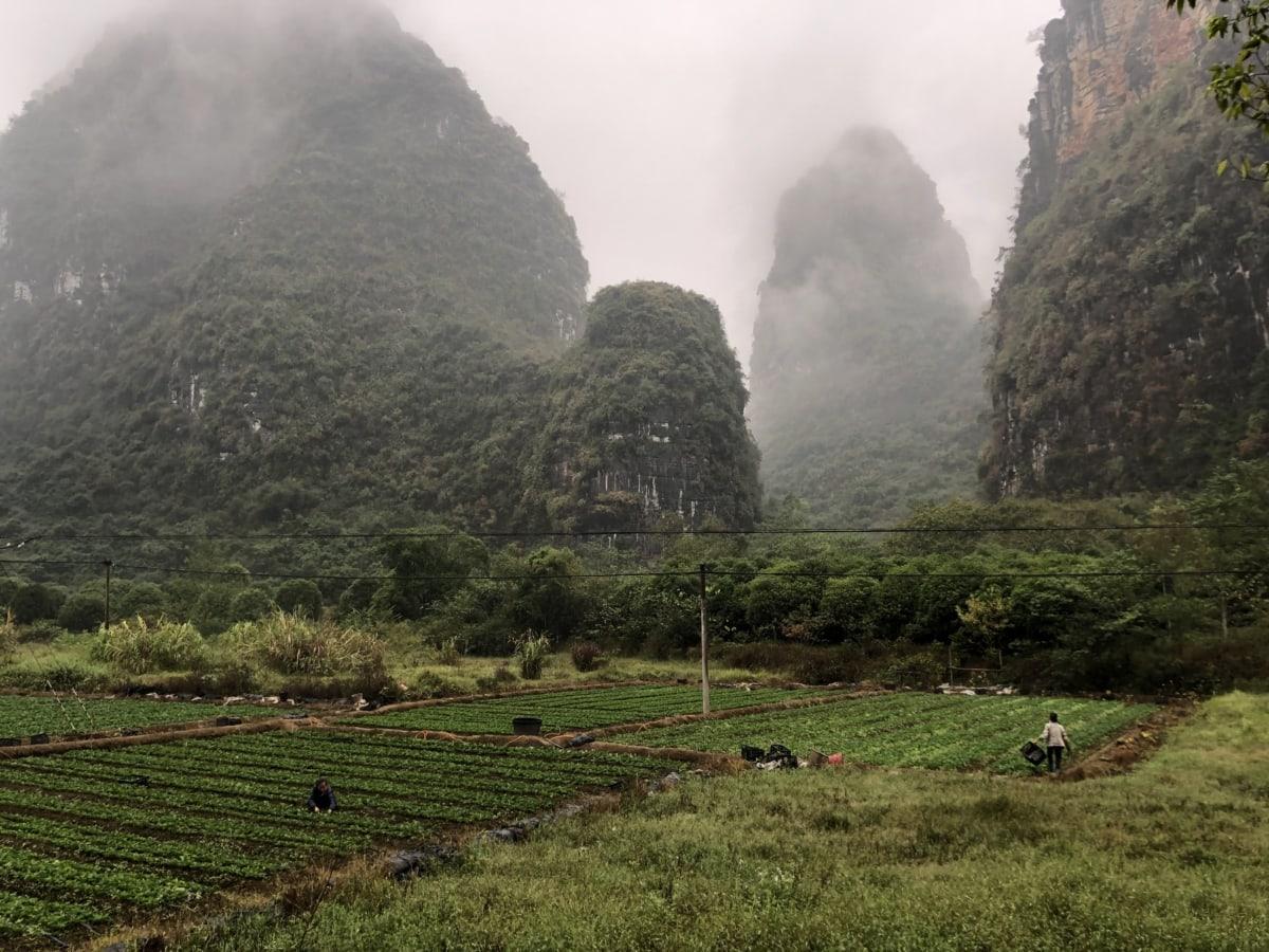 poljoprivreda, Kina, usjevi, polje, plantaža, selo, seljak, krajolik, glavici, planinski kraj