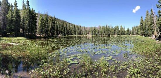 aquatique, plante aquatique, marais, États-Unis, nénuphar, zones humides, nature, rivière, Lac, eau