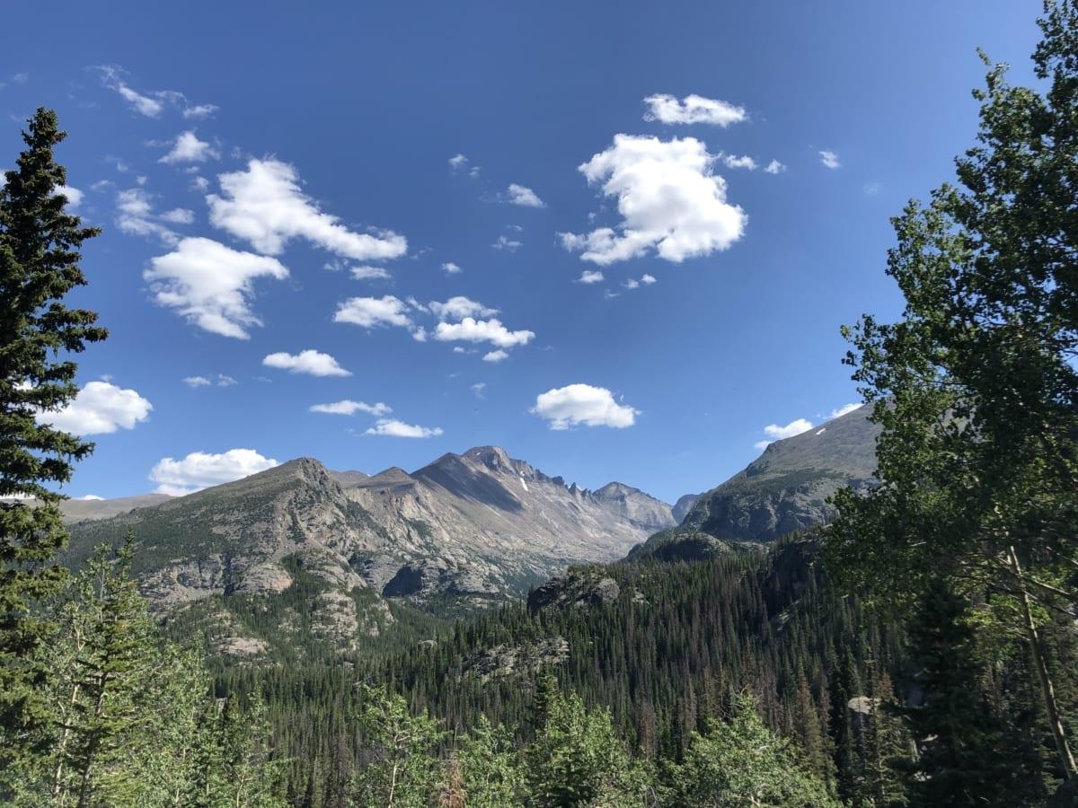 ensoleillée, paysage, bois, montagnes, montagne, Forest, neige, gamme, nature, arbre