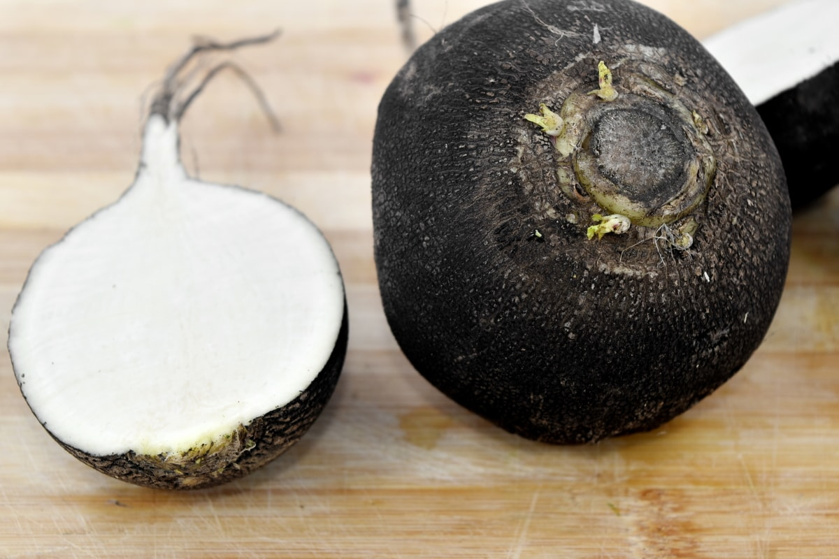 agriculture, black, radish, root, vegetable, food, nature, healthy, nutrition, whole