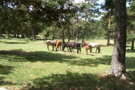 forest, grazing, horses, wildlife, ranch, meadow, rural, horse, grass, field