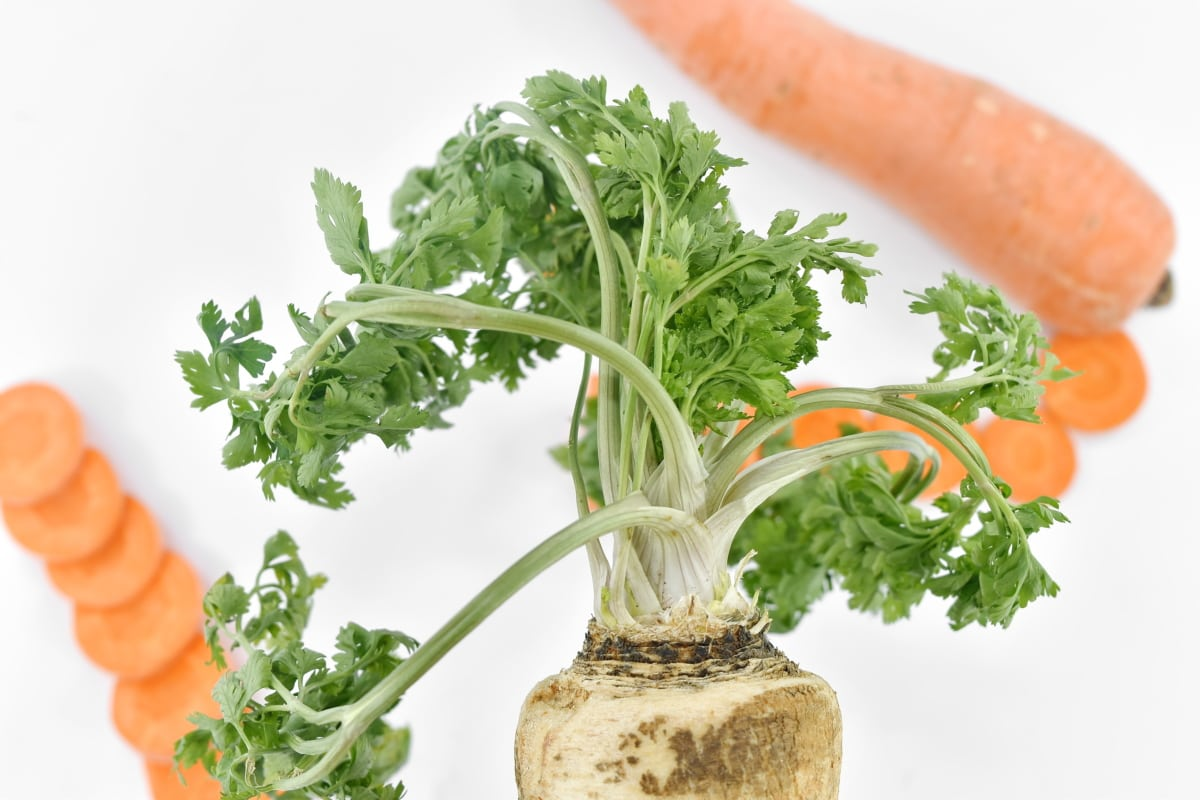 carrot, green leaves, organic, parsley, root, spice, food, vegetables, herb, ingredients