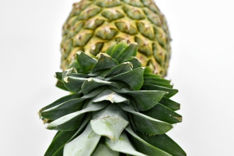 antioxidant, delicious, fruit, food, leaf, pineapple, tropical, exotic, herb, healthy