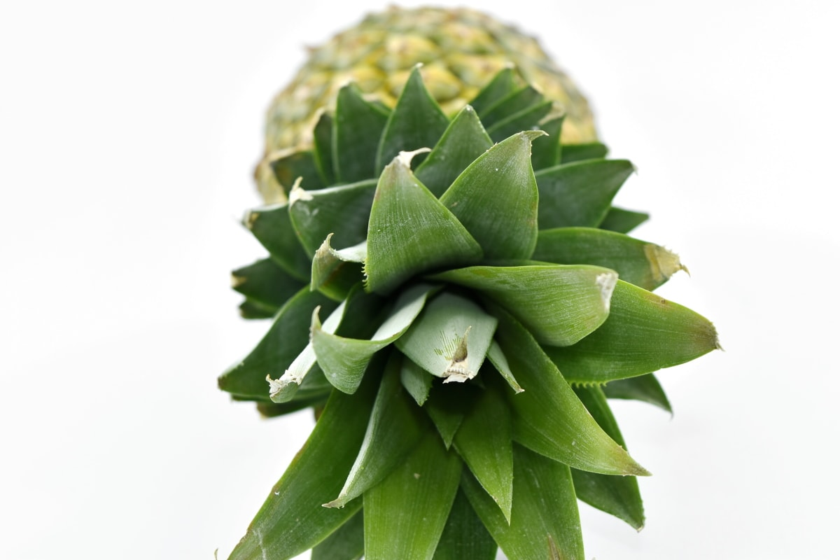 antioxidant, exotic, green leaves, pineapple, tropical, produce, food, herb, plant, leaf