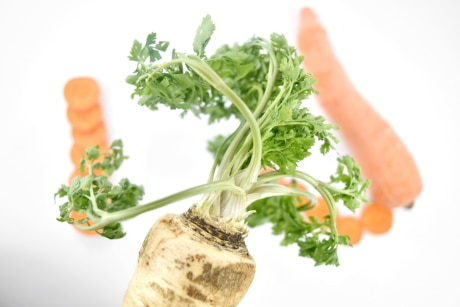 agriculture, carrot, close-up, green leaves, nutritient, parsley, roots, vegetable, root, salad