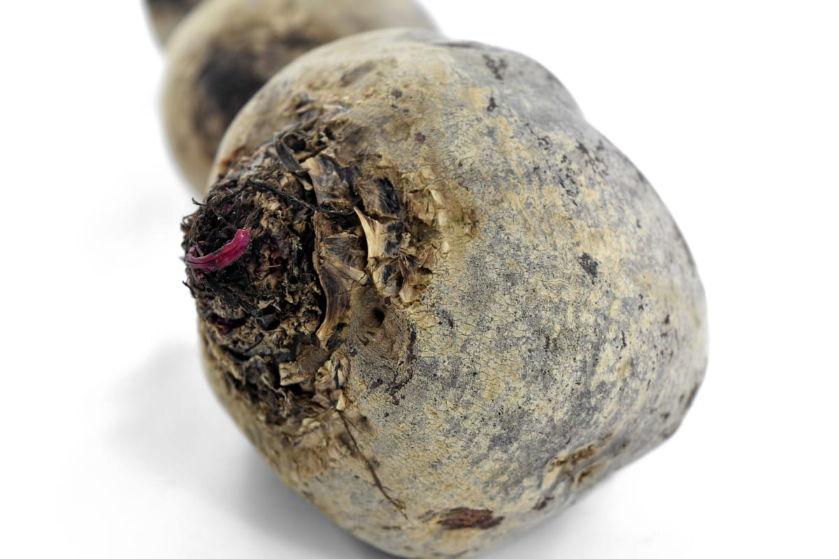 agriculture, beetroot, healthy, organic, roots, vegetable, whole, food, health, root