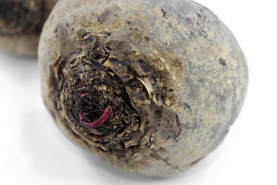 agriculture, antioxidant, beetroot, carbohydrate, close-up, root, side view, nature, health, food