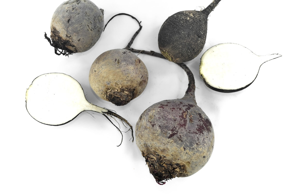 beetroot, black and white, radish, roots, vegetables, food, root, nature, nutrition, vegetable