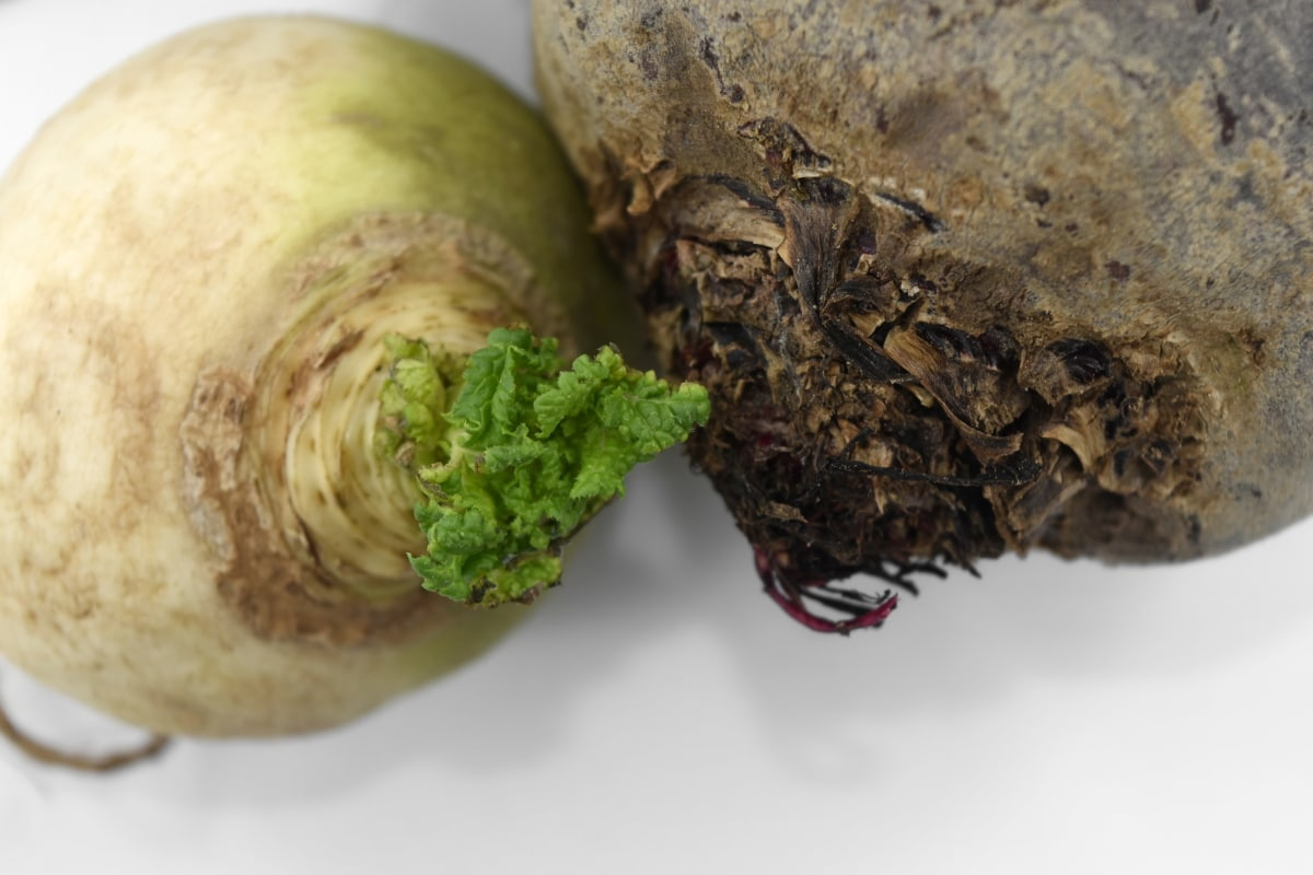 beetroot, cortex, culinary, radish, roots, turnip, vegetables, food, produce, nature