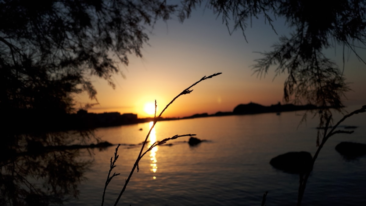 backlight, coast, darkness, horizon, landscape, shadow, silhouette, sunset, twig, water