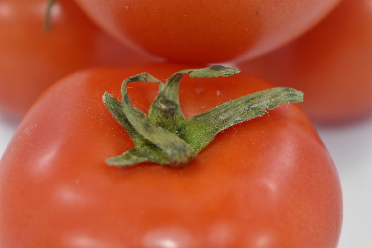 close-up, details, green leaves, tomato, vegetable, fresh, food, nutrition, leaf, delicious