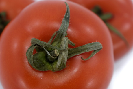 agriculture, aroma, diet, product, tomato, tomatoes, fresh, healthy, vegetable, food