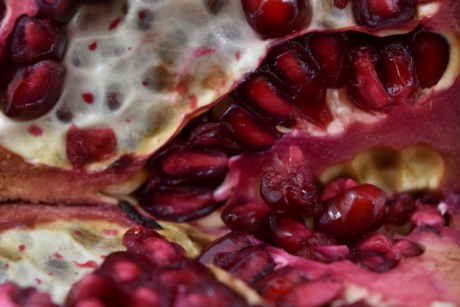 kernel, macro, pomegranate, seed, fruit, dessert, produce, food, sweet, fresh