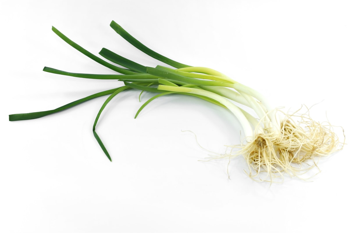 aromatic, chive, herb, onion, product, wild onion, leek, nature, leaf, root