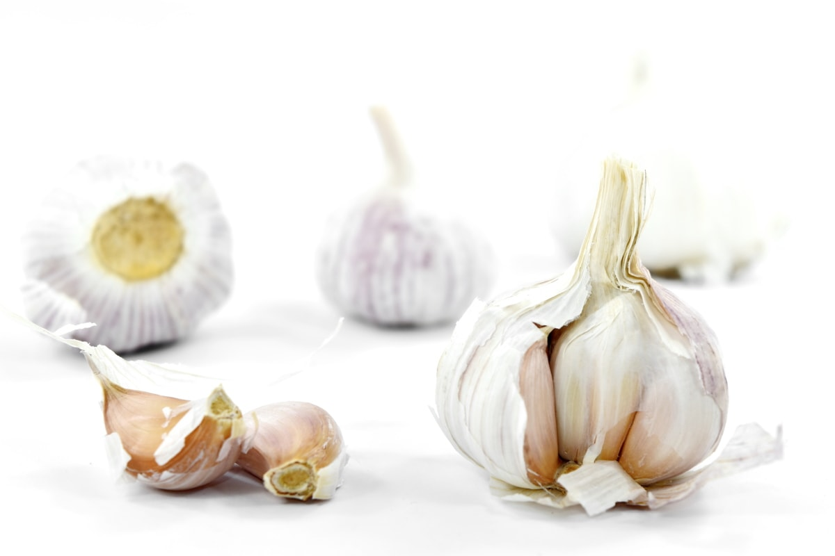 aromatic, carbohydrate, close-up, details, garlic, root, vegetable, food, spice, organic