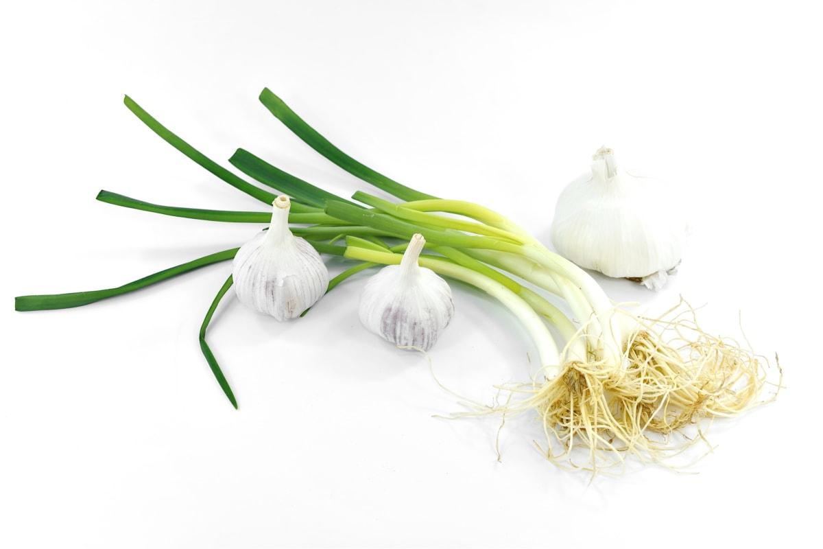 agriculture, appetite, garlic, leek, onion, products, vegan, wild onion, nature, leaf
