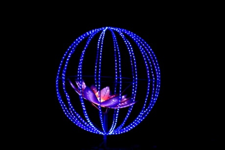 art, blue, flower, illuminated, light, night, round, shape, spectacular, wires