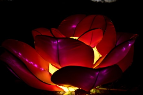 flower, illuminated, lamp, light, purplish, red, stained glass, design, art, dark
