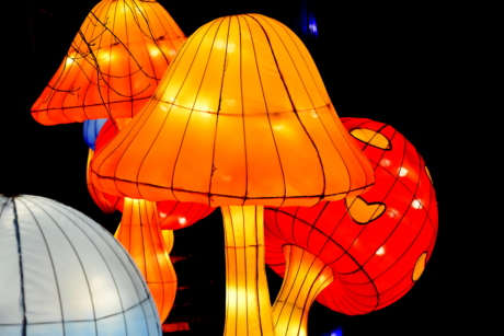 electricity, illumination, lamp, lantern, light, luminescence, mushrooms, night, art, black